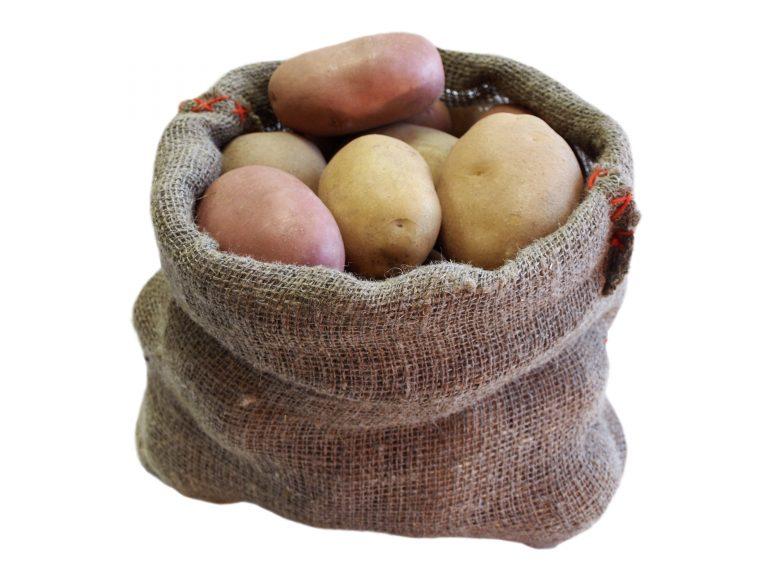 купить семена раннего картофеля в беларуси